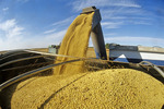 a grain wagon unloads soybeans into a farm truck during the harvest