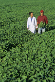 a farmer and crop scientist in a mid growth soybean field