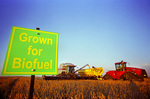 a combine harvester unloads soybeans into a grain wagon on the go during the harvest, biofuel sign in foreground