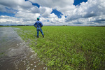 a farmer in a flooded early growth barley field, developing storm clouds in the sky, near Niverville, Manitoba, Canada