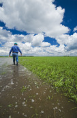 a farmer examines a flooded early growth barley field, developing storm clouds in the sky, near Niverville, Manitoba, Canada