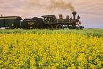 Prairie Dog Central steam locomotive passes a canola field, near Winnipeg, Manitoba, Canada