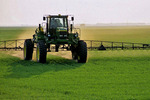 spraying wheat with herbiicide, near Niverville, Manitoba, Canada