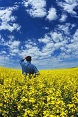 a man looks out over a field of bloom stage canola