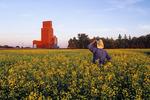 canola field with grain elevator in the background, near Winnipeg, Manitoba, Canada