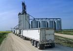 trucks hauling grain to an inland terminal, near Winnipeg, Manitoba, Canada