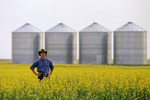 a man looks out over a field of bloom stage canola with grain bins(silos) in the background