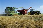 a combine empties into a grain wagon on the go during the canola harvest