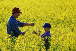 a farmer and his son in a bloom stage canola field