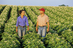 a farmer and his wife chat while walking in a mid growth bloom stage potato field , near Holland, Manitoba, Canada