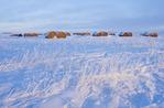 alfalfa bales near Estevan, Saskatchewan, Canada
