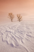 trees and snow drifts caused by wind on the open prairie, near Assiniboia,  Saskatchewan, Canada