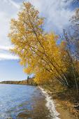 Waskasiu Lake, Prince Albert National Park, Saskatchewan, Canada