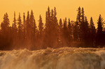 spruce trees and flowing water,  Pisew Falls Provincial Park, Manitoba, Canada