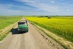 a man driving an old truck on a country road with blooming mustard field on the right,  near Ponteix, Saskatchewan,, Canada