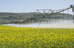Irrigating canola, South Saskatchewan River Valley near Estuary,  Saskatchewan, Canada