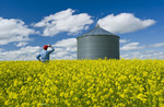 farmer in bloom stage mustard field with grain bin in the background, near Ponteix, Saskatchewan, Canada