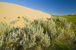 the Great Sandhills, near Sceptre, Saskatchewan, Canada