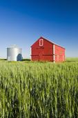 grain bins in wheat field, near Sceptre, Saskatchewan, Canada
