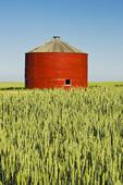 red grain bin in wheat field, near Sceptre, Saskatchewan, Canada