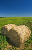 round alfalfa bales next to barley field, near Ponteix, Saskatchewan, Canada