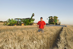 a young farmer in his mature durum wheat field during the harvest, grain wagon and combine in the background, near Ponteix, Saskatchewan, Canada