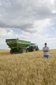 a young farmer in his mature durum wheat field during the harvest, grain wagon in the background, near Ponteix, Saskatchewan, Canada