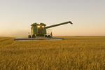 a combine using a stripper header harvests barley, near Ponteix,  Saskatchewan, Canada