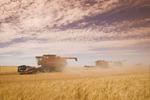 combines harvest durum wheat, near Ponteix, Saskatchewan, Canada