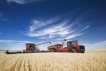 a combine augers durum wheat in to a grain wagon on the go near Ponteix, Saskatchewan, Canada
