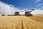 a combine augers durum wheat in to a grain wagon on the go, near Ponteix, Saskatchewan, Canada