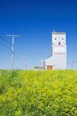wind-blown sweet yellow clover, old grain elevator, Glentworth, Saskatchewan, Canada