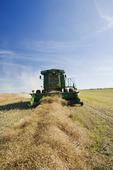 a combine harvester works in a canola field, near Kamsack, Saskatchewan, Canada