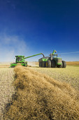 a combine unloads into a grain wagon on the go, during the canola harvest near Kamsack, Saskatchewan, Canada