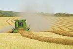 a combine harvester works in a canola field, near Togo, Saskatchewan, Canada