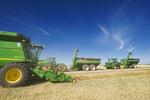 a combine harvester and grain wagons in a canola field, near Kamsack, Saskatchewan, Canada