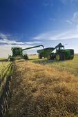 a combine empties into a grain wagon on the go during the canola harvest, near Hodgeville, Saskatchewan, Canada