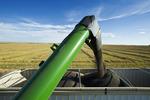 canola harvest near Hodgeville, Saskatchewan, Canada