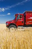 man in a farm truck next to a wheat field, near Dugald , Manitoba
