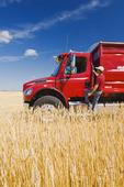 man on a farm truck next to a wheat field, near Dugald , Manitoba