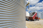 harvested barley is augered into a grain bin, near Dugald, Manitoba, Canada