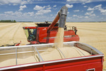 a combine augers barley into a farm truck durung the harvest, near Dugald, Manitoba, Canada