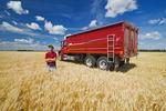 man in a wheat field next to a farm truck, near Dugald , Manitoba