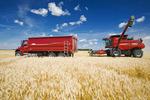 barley harvest next to a mature wheat field, near Dugald, Manitoba, Canada