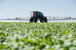 a high clearance sprayer applies herbicide to early growth canola, near Dugald, Manitoba, Canada
