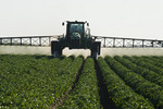 a high clearance sprayer applies fungicide on potatoes, near Holland, Manitoba, Canada