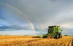 a  female combine operator harvests wheat, rainbow in the background, near Niverville, Manitoba, Canada