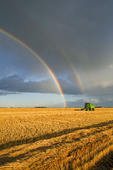 a combine harvester with a rainbow in the background, during the wheat harvest near Niverville, Manitoba, Canada