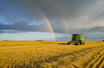 a farm girl operates a combine harvester during the spring wheat harvest near Niverville, Manitoba, Canada