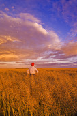 a man looks out over a field of harvest ready canola which will be straight cut,  near Niverville, Manitoba, Canada